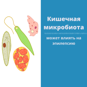 Read more about the article Эпилепсия и кишечная микробиота